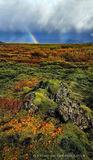 Iceland in autumn