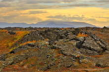 Myvatn region birch color among lava flows