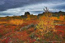 Myvatn region birch forests in fall