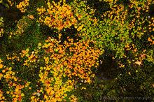 Autumn foliage in the Myvatn region, Iceland