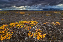 Autumn foliage and a stormy sky in the Icelandic Highlands
